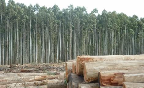 Madera: Casi el 50 % de la energía renovable producida en la UE