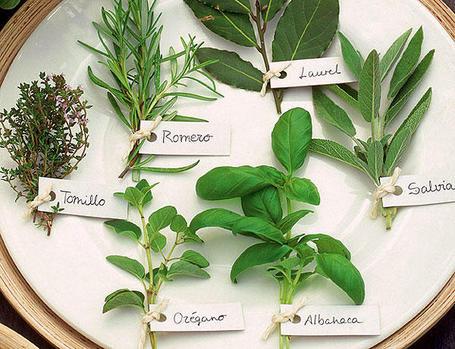 Hierbas aromáticas para realzar el sabor de tu barbacoa