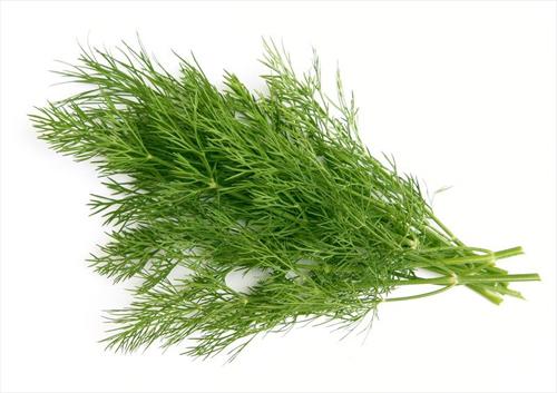 Ramillete de eneldo - Las hierbas aromaticas
