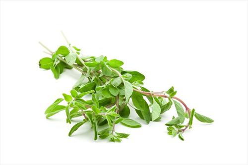 Ramitas de mejorana - Las hierbas aromaticas