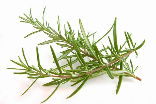 Ramita de romero - Las hierbas aromaticas