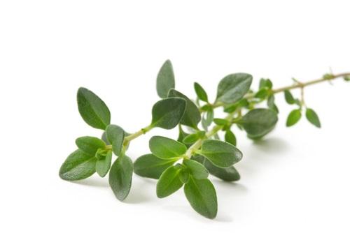 ramita de tomillo - Las hierbas aromaticas